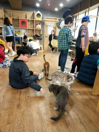 Just hanging out at a cat cafe in Seoul.