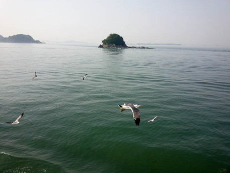 Seagulls chasing the ferry, hoping for more shrimp flavored cheetos.