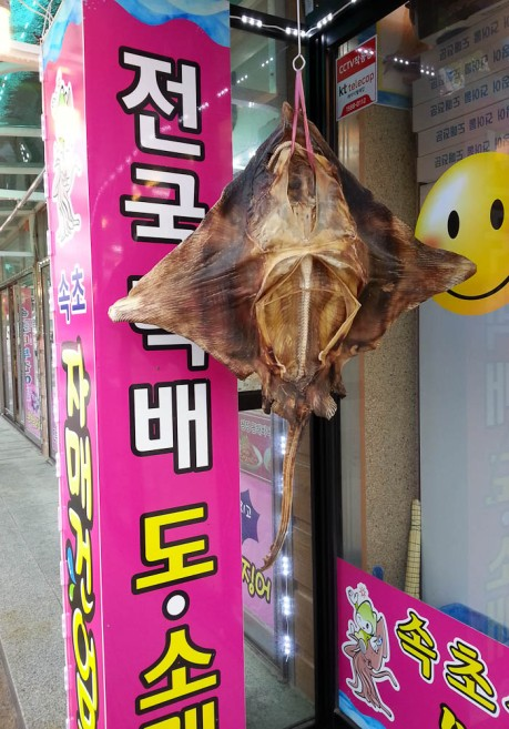 Dried squid is everywhere.