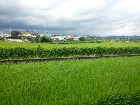 A storm brewing and wind blowing though rice fields at the Cheongju Airport train station.