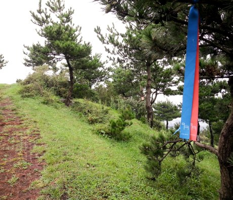 The Jeju Olle Trails are marked with these blue and red ribbons.