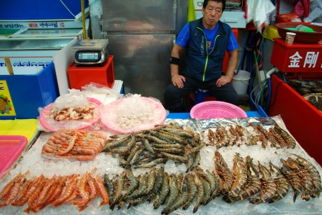 Look at the size of those prawns!