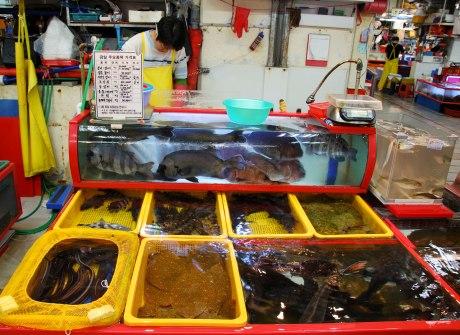 More fish.
