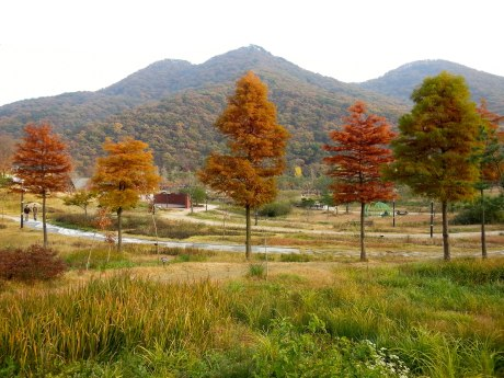 More fall colors at Seonunsan Provincial Park.