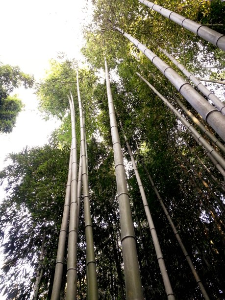Walking through a bamboo forest in Damyang.