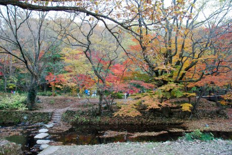 A fall stroll through Seonunsan Provincial Park.