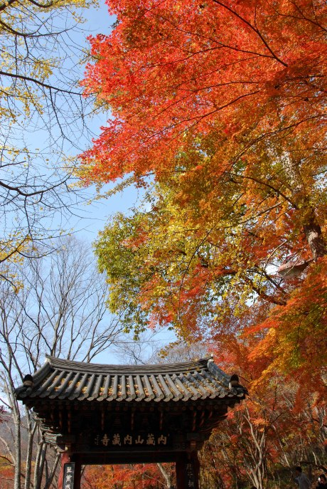 A burst of color at Naejangsan National Park.